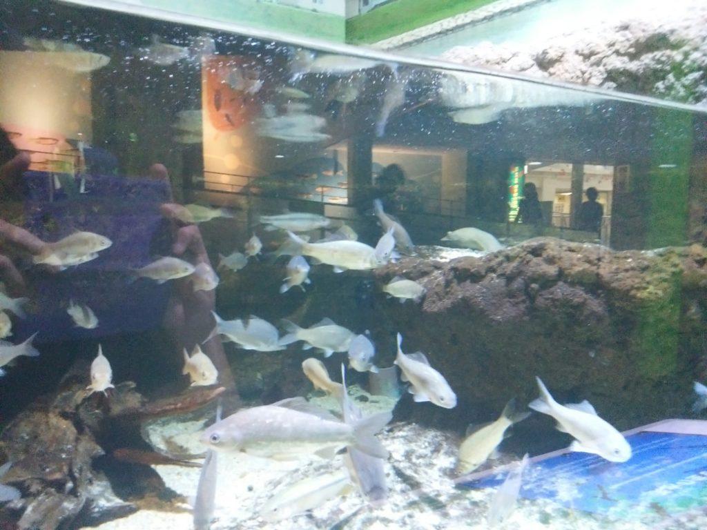 姫路市立水族館 すっぽん