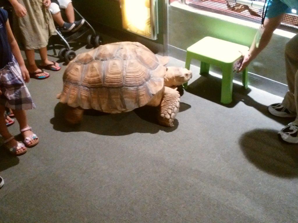 姫路市立水族館 亀