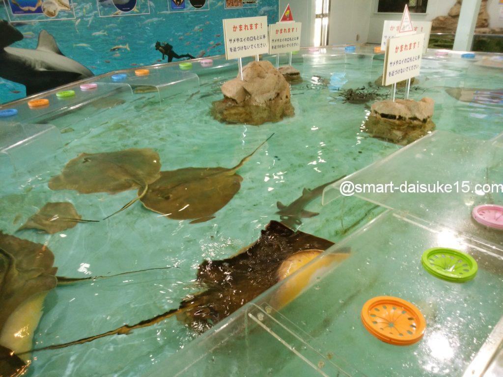 姫路水族館タッチプール