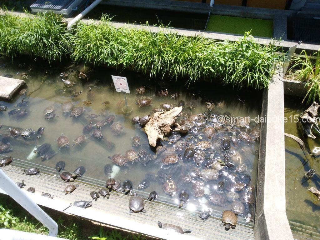 姫路市立水族館 カメ
