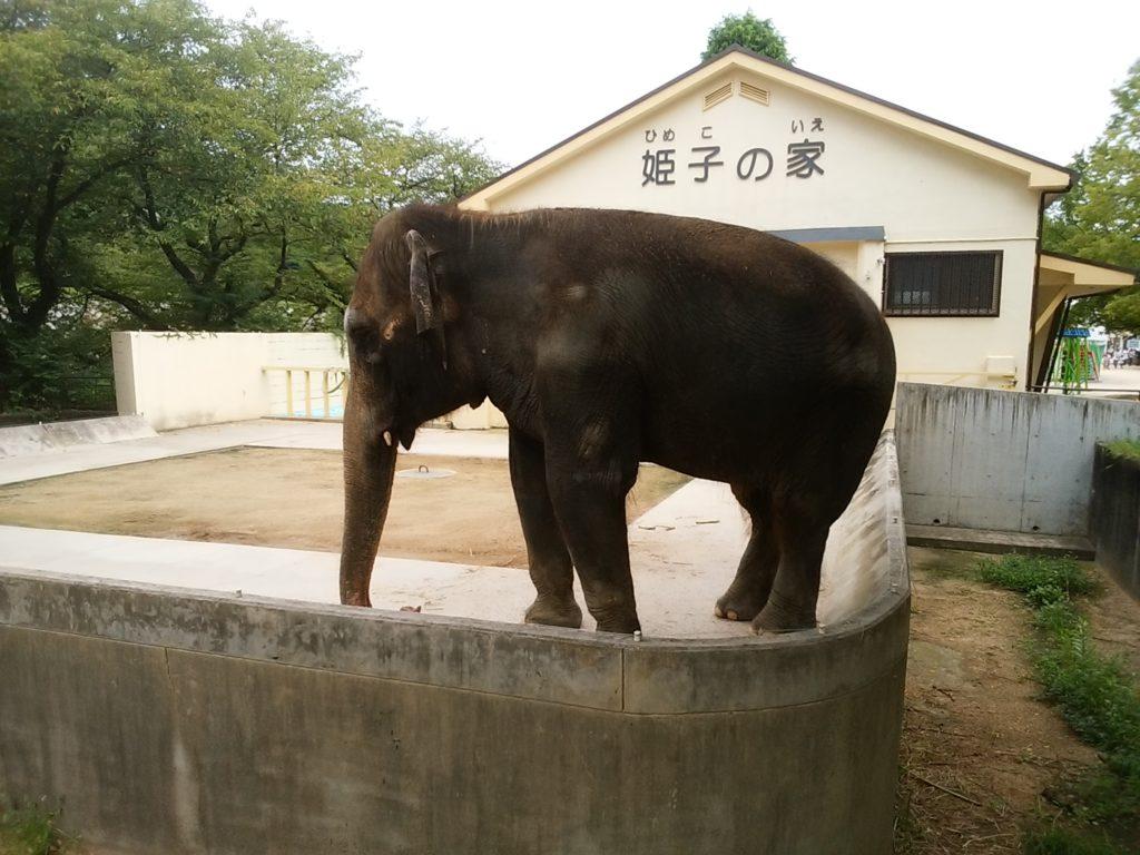 姫路動物園 ゾウの姫子