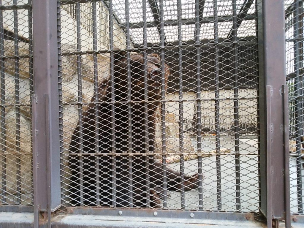 姫路動物園 エゾヒグマ