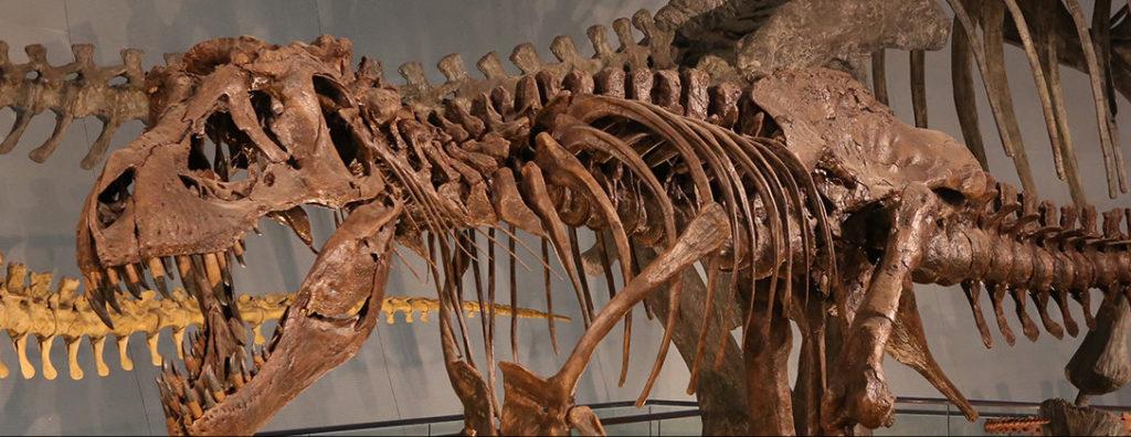 越前松島水族館 恐竜博物館
