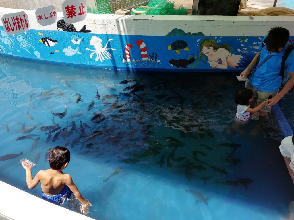 越前松島水族館 ふれあい