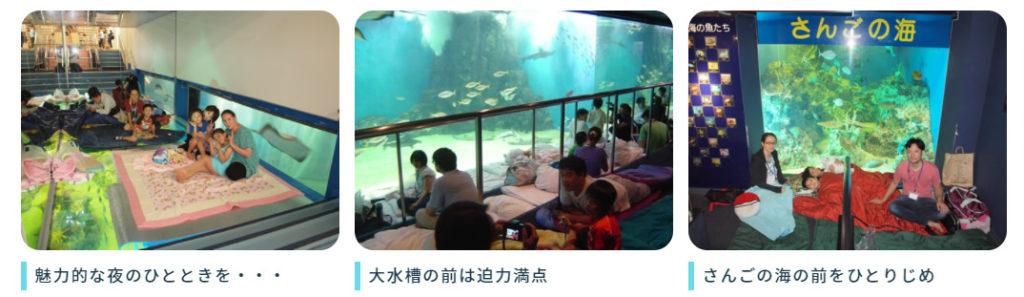 越前松島水族館 泊まる