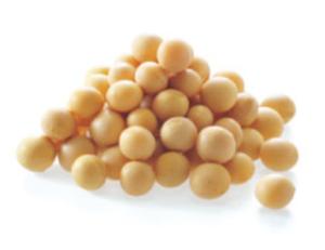 アイムピンチ 大豆