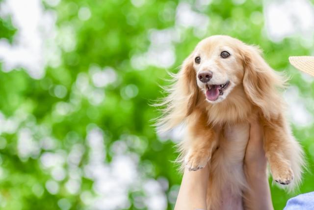愛犬 ドッグフード